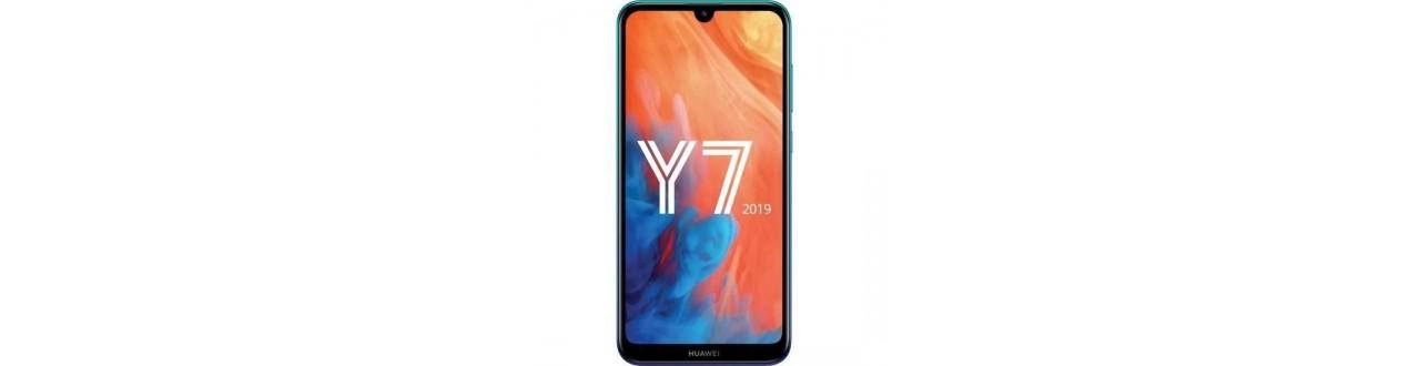 Y7 2019